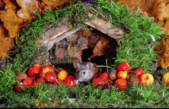 This Man's Garden Became A Sweet New Pad For This Family Of Mice