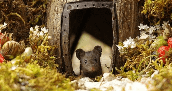 This Man's Garden Becomes A Sweet New Pad For This Family Of Mice