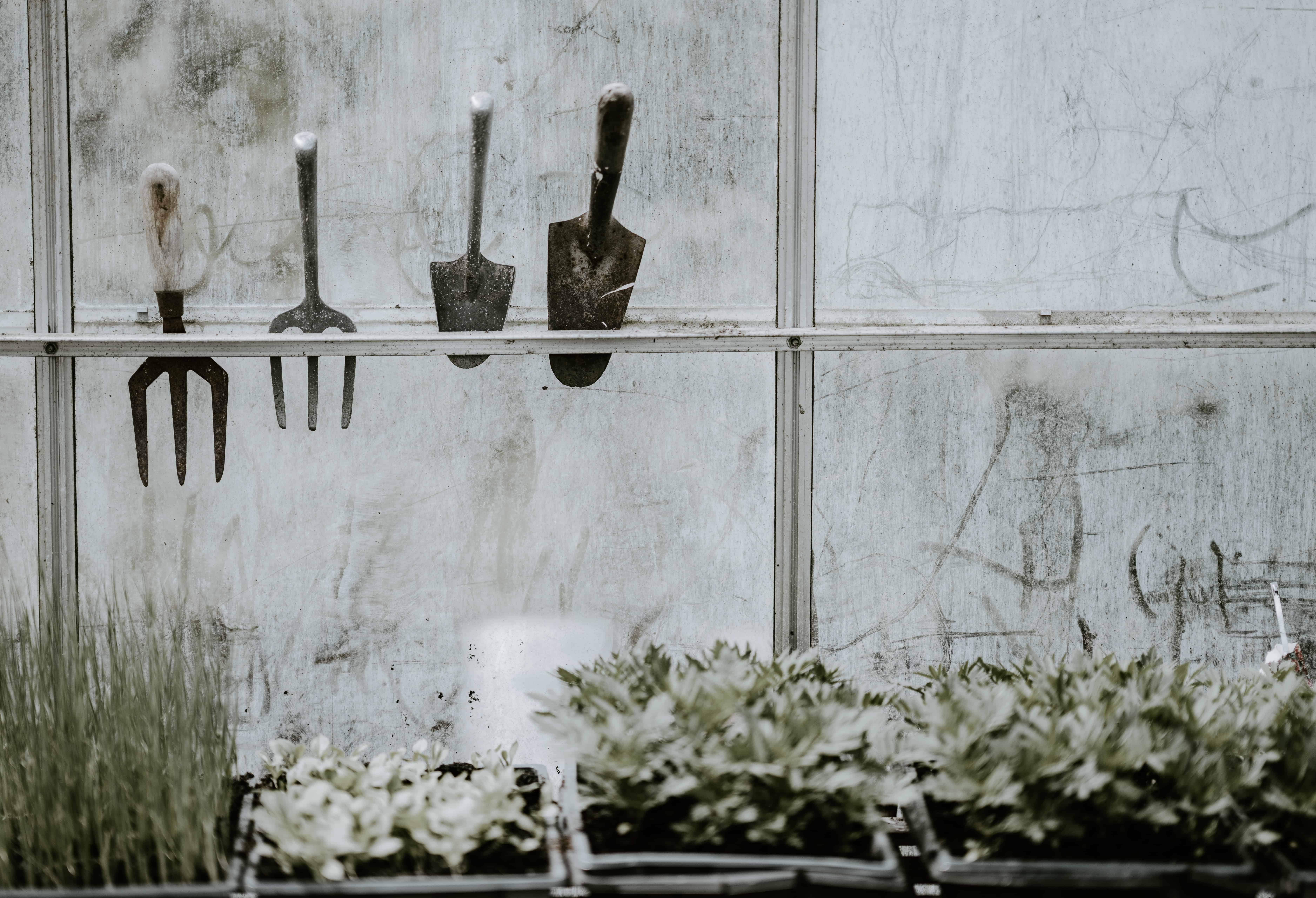5 Gardening Tools Every Beginner Should Own