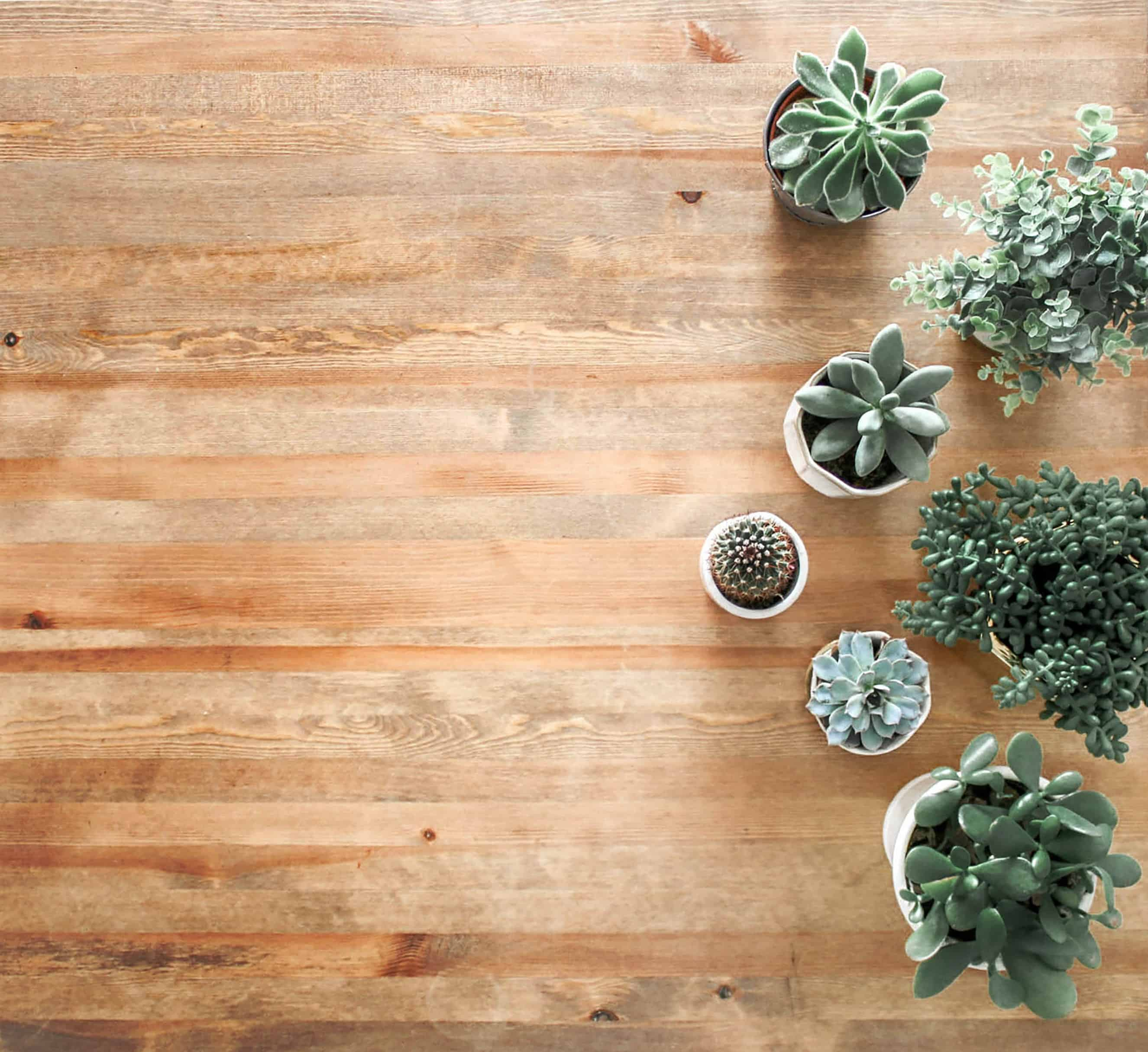 Why Freelancers Need Succulent Plants In Their Bedroom