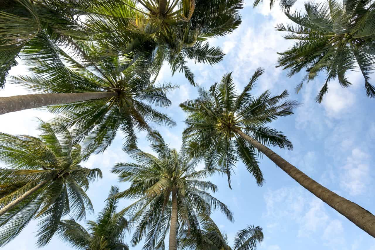 Palm trees though common but are one of the most exquisite trees one can use for garden