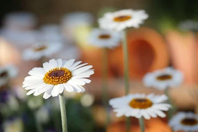 Spring Flowers: Addition To Your Garden