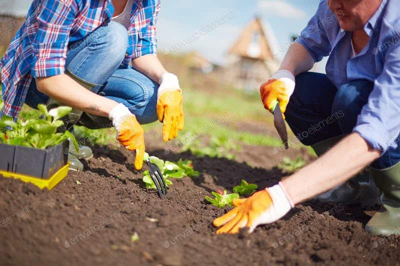 Gardening 101: Everything You Need to Know to See Your Garden Grow