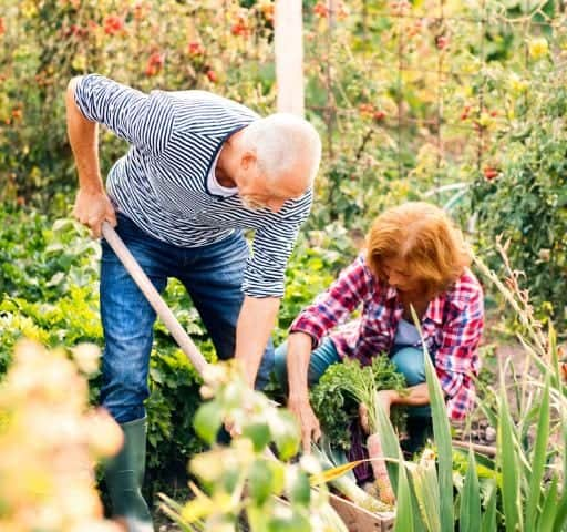 Tips to Help You Plant Your Vegetable Gardens