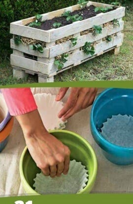 Gardening Tips And Ideas That You Can Try At Home