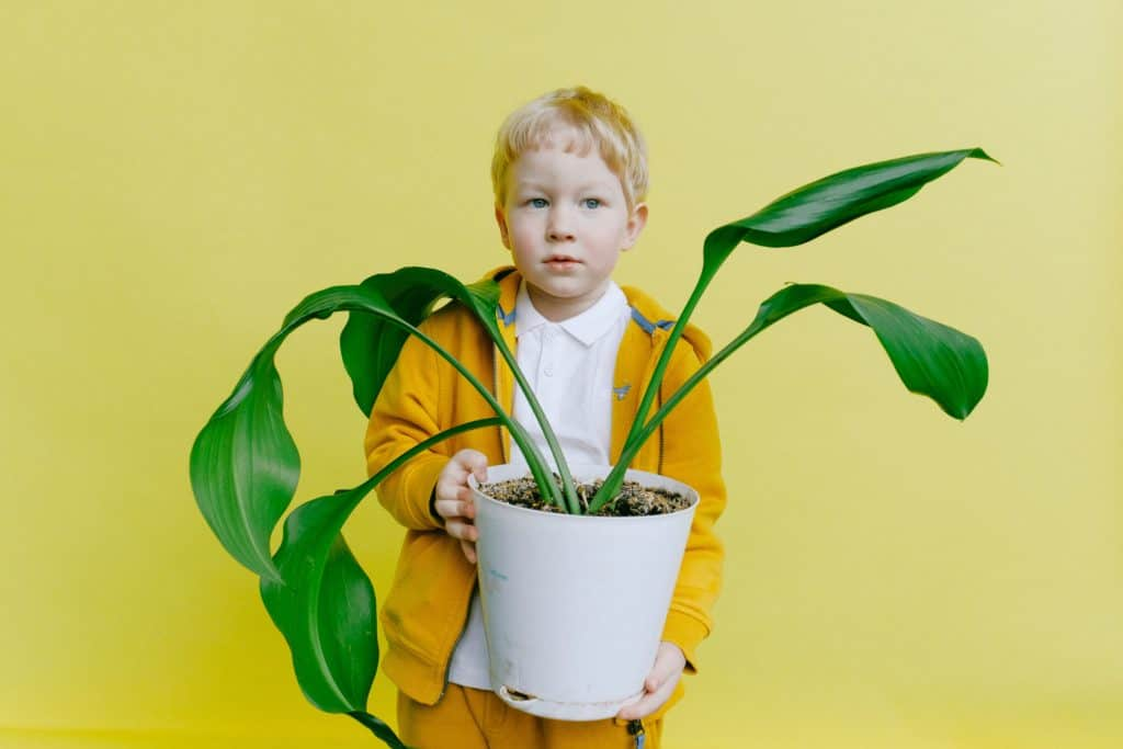 Time Plant Grower: The Reasons Why You Should Choose It