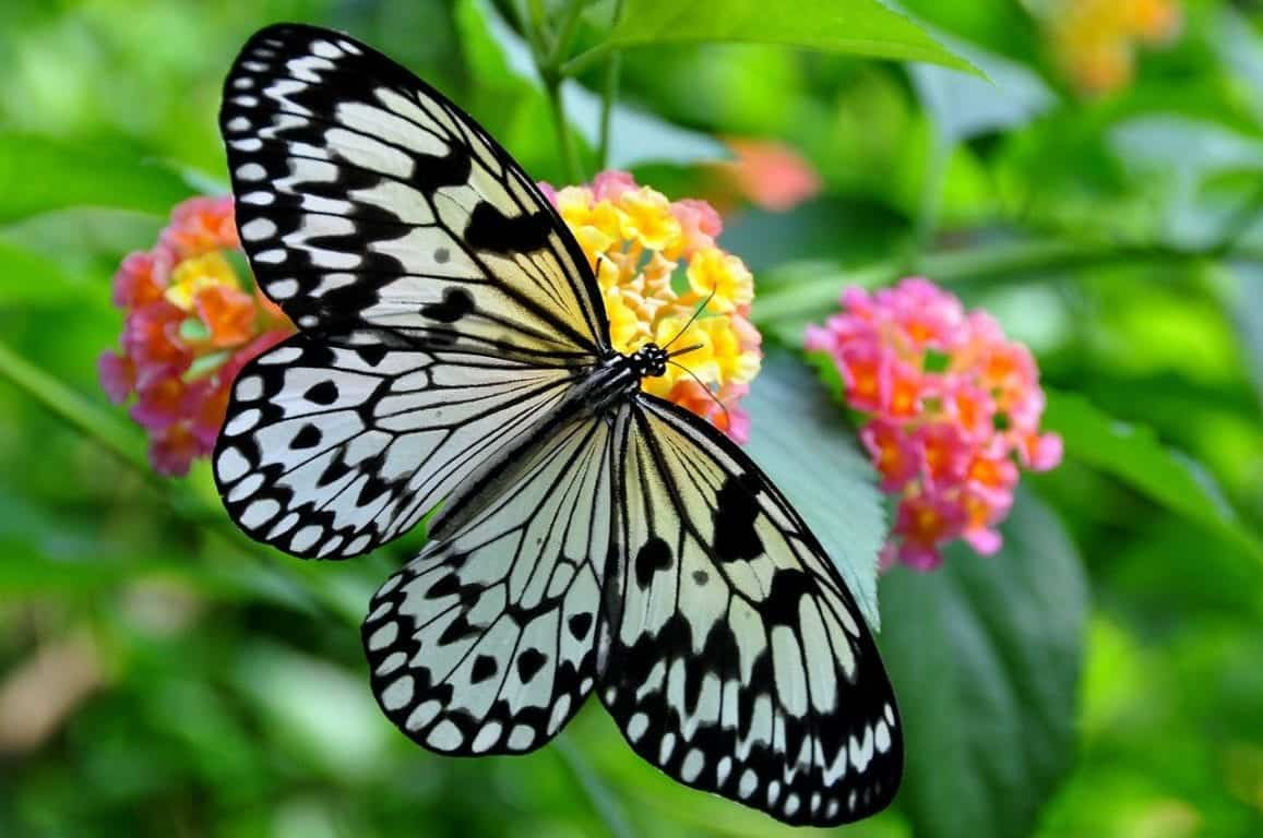 A colorful butterfly on a flower