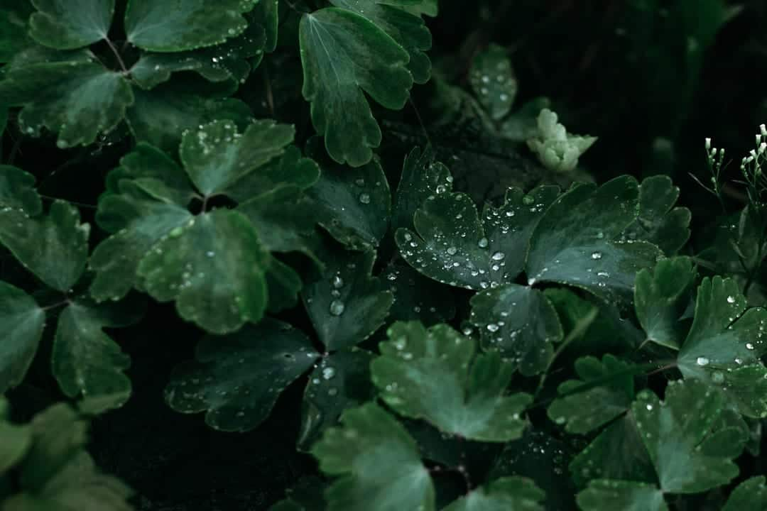 A close up of a green plant