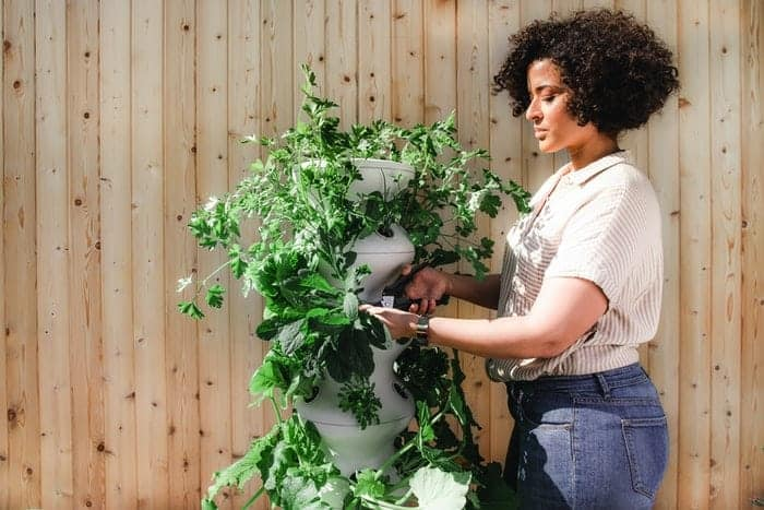 A woman arranging the plant