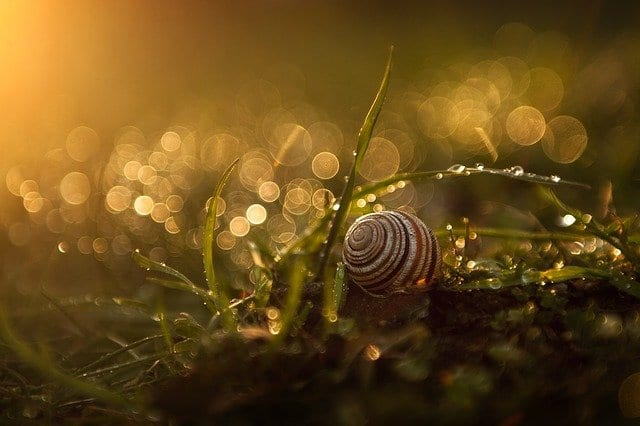 A snail on the ground