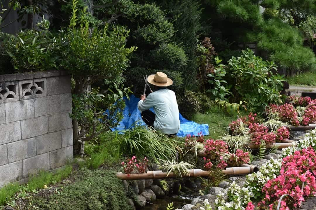 A person sitting in a garden