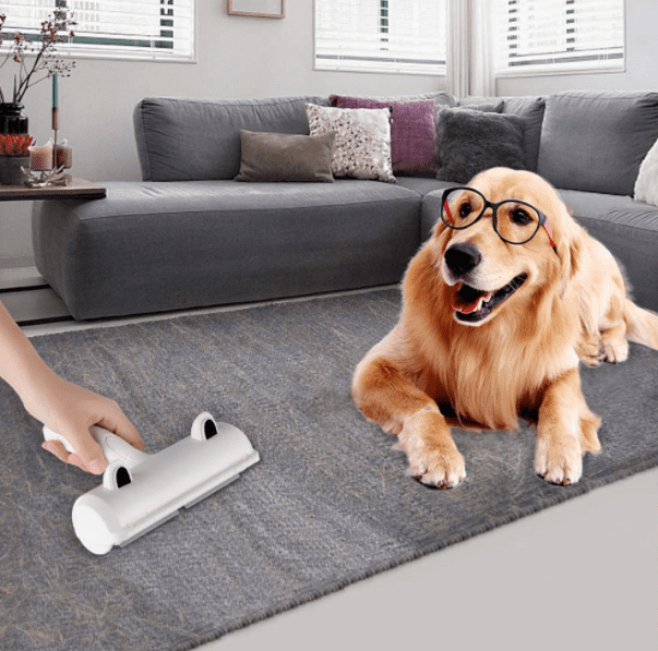 A dog sitting in the living room